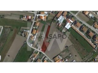See Land, Cacia, Aveiro, Cacia in Aveiro