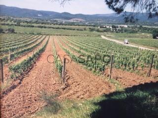 Ver Explotación agraria Con garaje, Vila de Redondo, Évora en Redondo