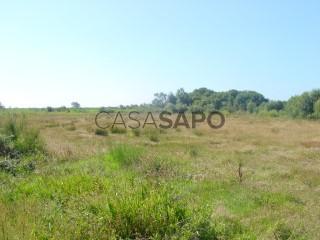 Voir Terrain Rustique, Ribeiro, Murtosa, Aveiro à Murtosa
