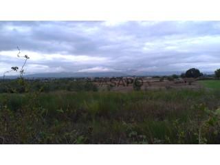 See Land, Lardosa, Castelo Branco, Lardosa in Castelo Branco