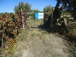 See Rural Land, Lardosa, Castelo Branco, Lardosa in Castelo Branco