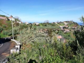 Voir Terrain, São Jorge, Santana, Madeira, São Jorge à Santana