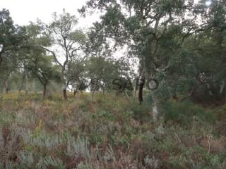 See Rural Land, Santa Maria do Castelo e Santiago e Santa Susana, Alcácer do Sal, Setúbal, Santa Maria do Castelo e Santiago e Santa Susana in Alcácer do Sal