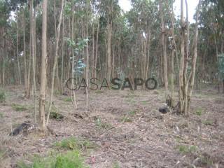 Voir Terrain Rustique, Albergaria-a-Velha e Valmaior, Aveiro, Albergaria-a-Velha e Valmaior à Albergaria-a-Velha