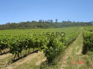 Ver Quinta Agrícola T0, Arruda dos Vinhos, Lisboa em Arruda dos Vinhos