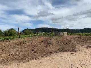 Ver Quinta Agrícola T0, Azueira e Sobral da Abelheira, Mafra, Lisboa, Azueira e Sobral da Abelheira em Mafra