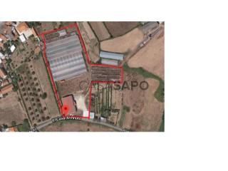 See Agricultural property, Pinheiro de Ázere, Santa Comba Dão, Viseu, Pinheiro de Ázere in Santa Comba Dão